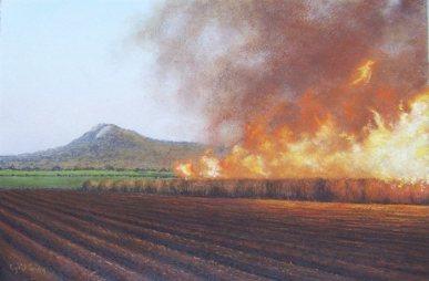 burning-sugar-cane